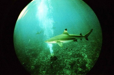 Fisheye Submarine