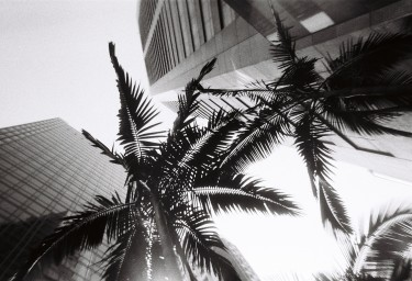 Simple Use Film Camera Black and White