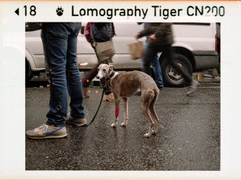 Lomography Color Tiger 110 3 шт.