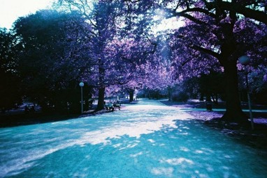 LomoChrome Purple XR 100-400 35mm Pack of 5