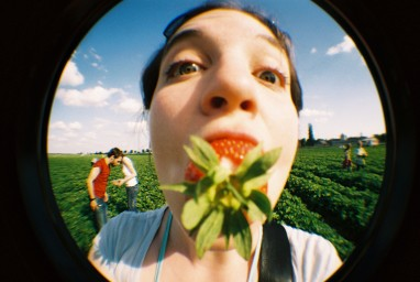 Fisheye No. 2 Lime Punch