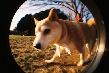 Fisheye One Grey