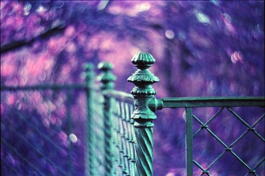 Lomography LomoChrome Purple XR 100-400 35mm Pack of 10