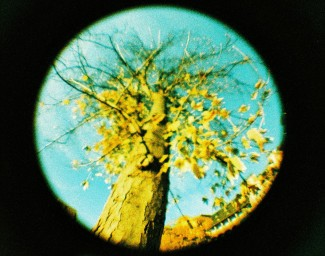 Lomography Peacock 110 正片菲林(ISO200)