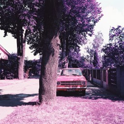 Lomochrome Purple 120 ISO 100-400 15 rolls