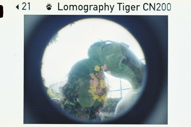 Lomography Color Tiger 200 ISO 110