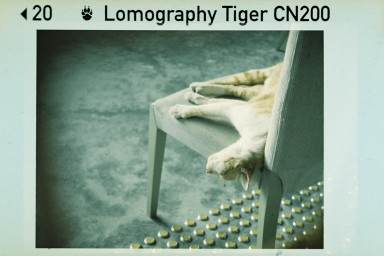 Lomography Color Tiger 110(一盒三卷)