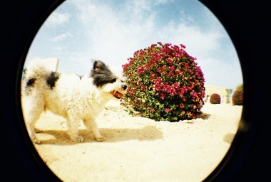 Fisheye One 35 mm Camera White Edition